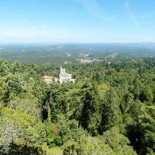 Der Wald von Bucaco